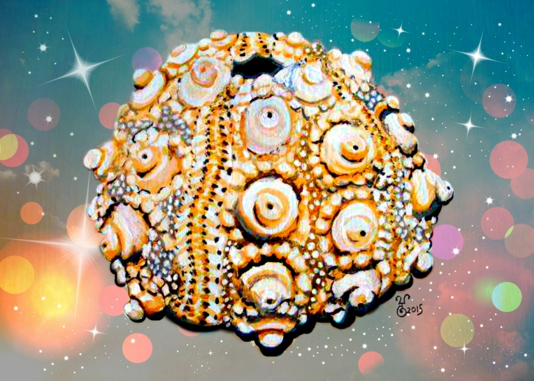 """Disco Sea Urchin"" 16x20"" Limited Edition mixed media digital print"